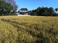 Inaho_1