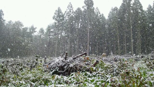 八戸雪景色