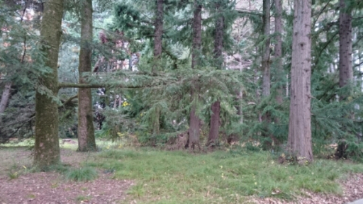 樹木が土壌を変える