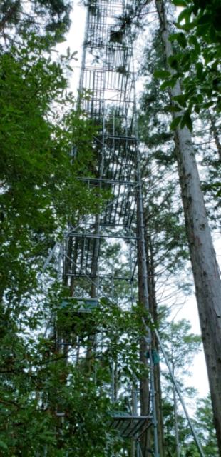 ツリータワー
